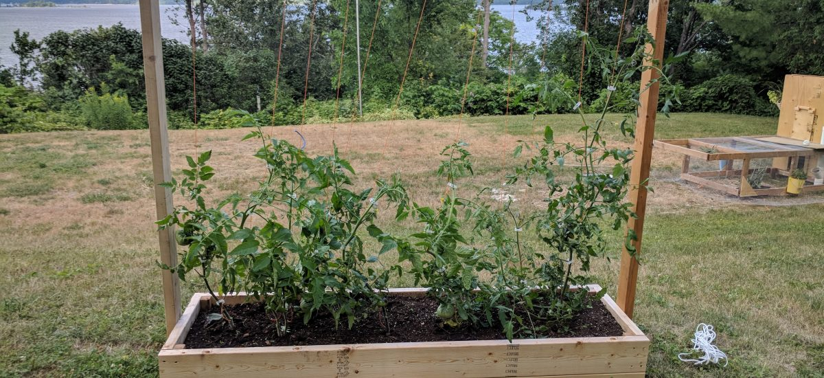 4 Reasons Why I still use Raised Bed Gardening (even though we live on an acre)