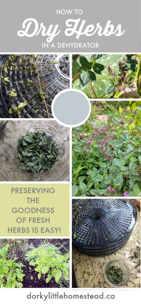 dehydrating herbs pin
