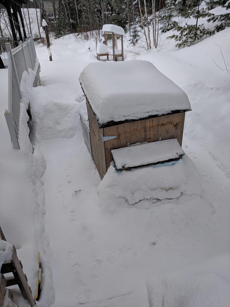 snowed in coop