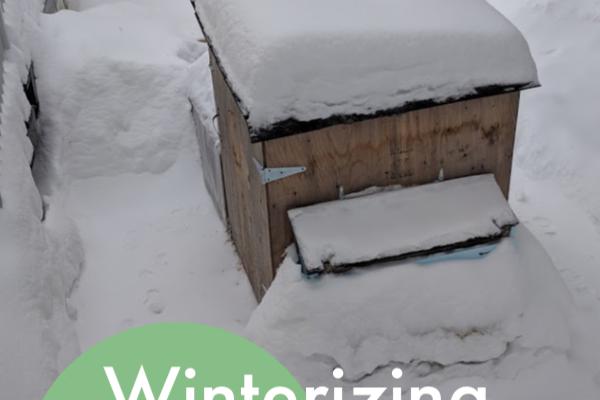 Winterizing the Chicken Tractor