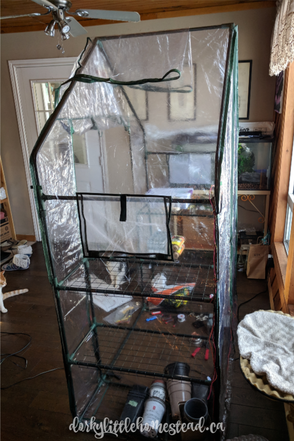 The cat proof greenhouse