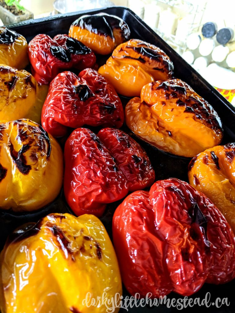 Charred peppers, right out of the oven.