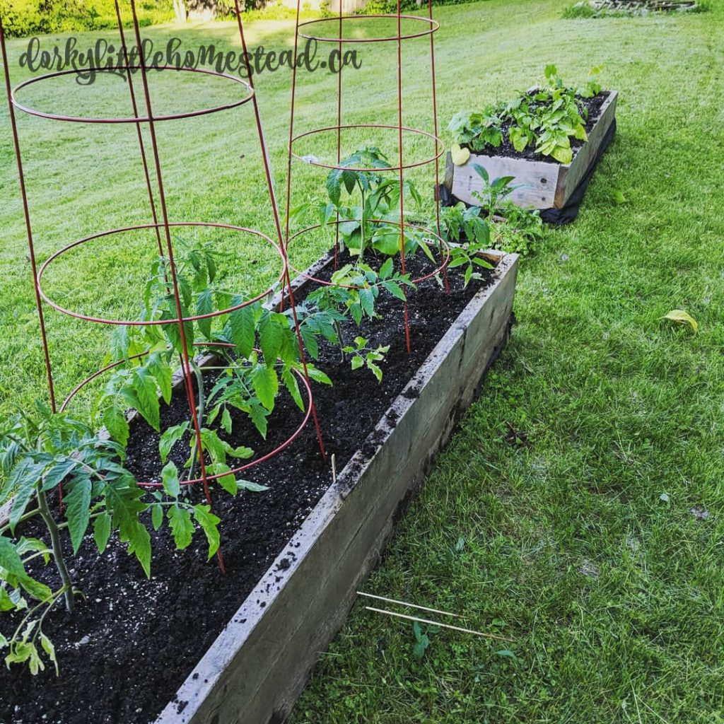Old garden beds from the city
