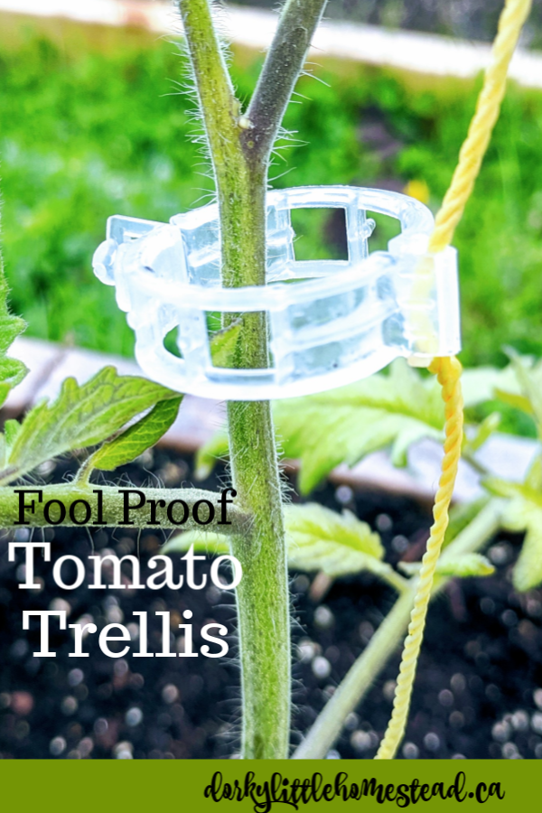 The simplest way to trellis your tomato vines. Requires very few materials and can be reused year after year.