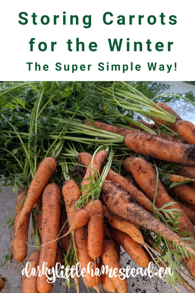 The perfect, and easy way to store your carrot harvest over the winter, without a root cellar, canning or pickling.