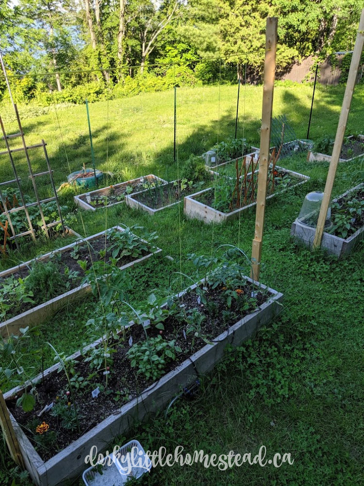 18 months: Our beautiful raised beds, nestled into the hillside.