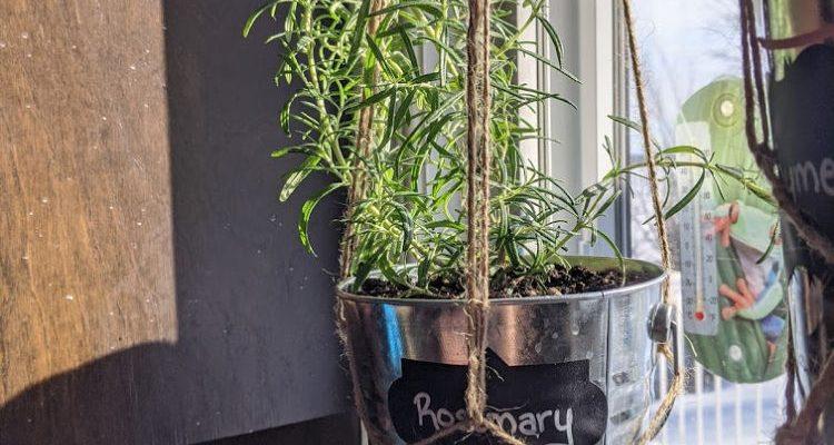 DIY Hanging Window Planter