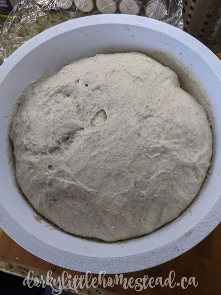 Dough ready to be divided!