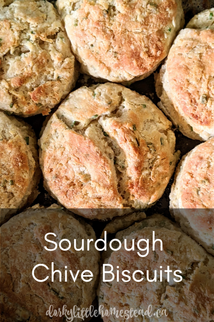 Buttery Sourdough Chive Biscuits, perfect for brunch, breakfast or alongside your next BBQ.