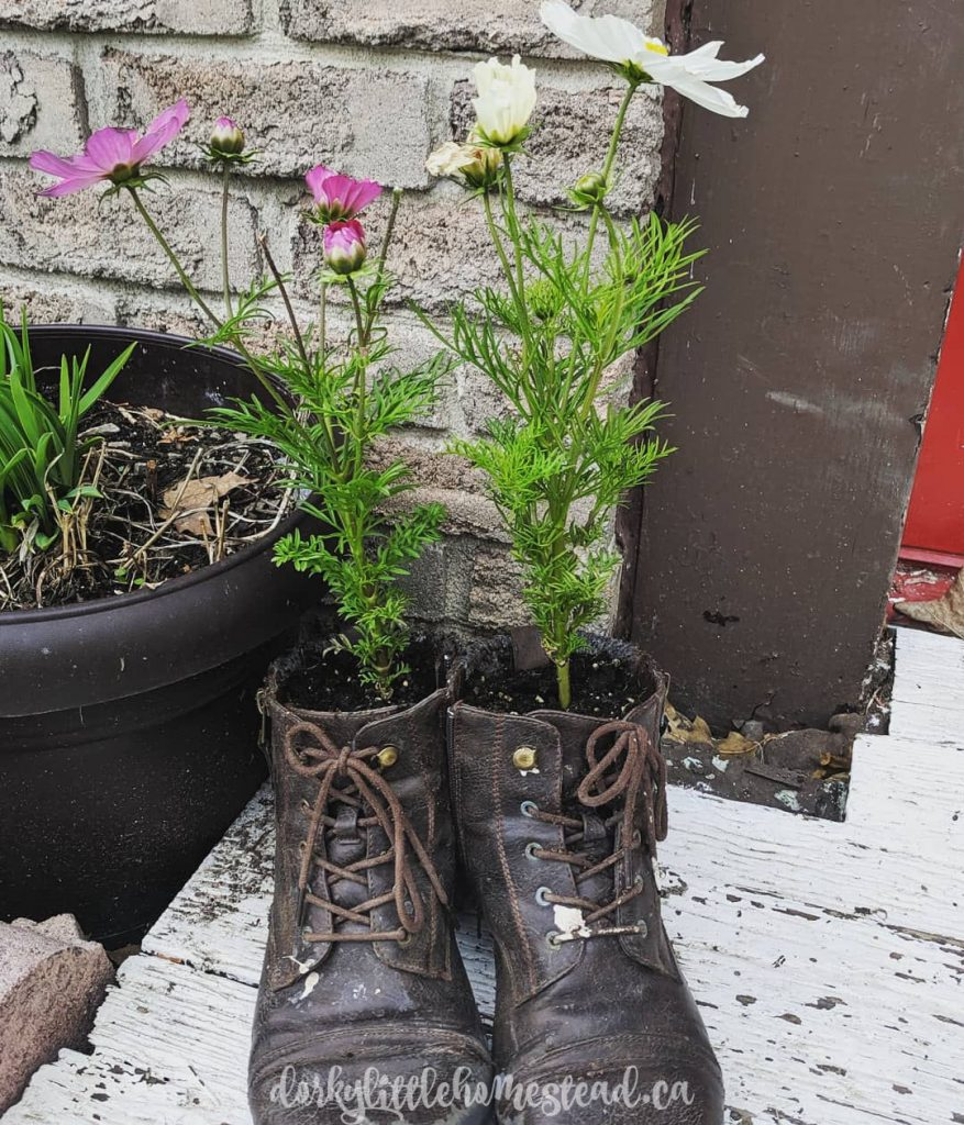 Planters  made of old shoes