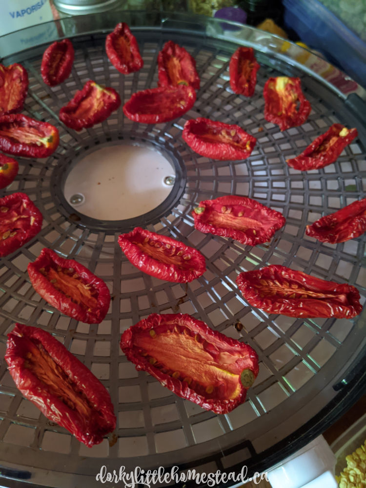 Drying tomatoes in the dehydrator