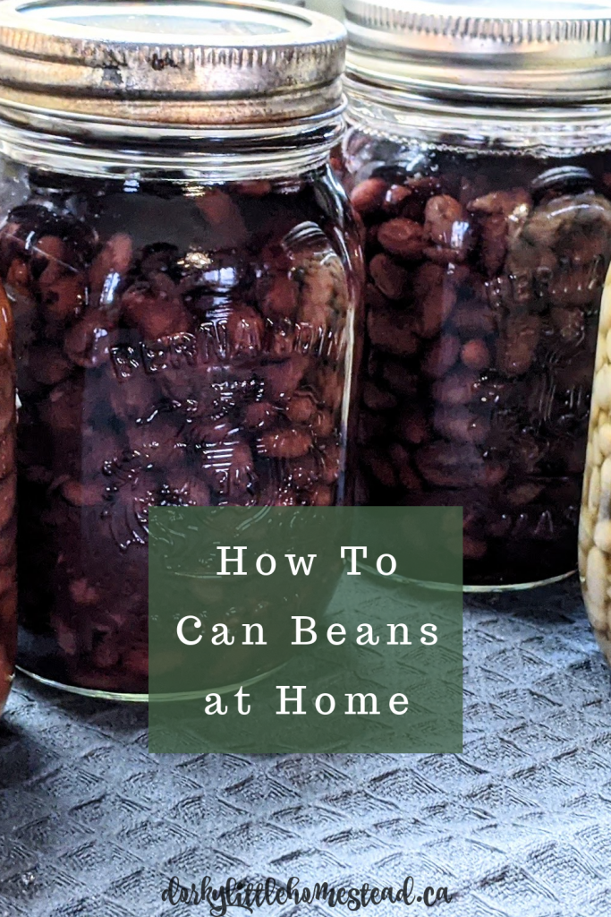 Canning dry beans at home is a great way to have your dry beans ready to go when you are!