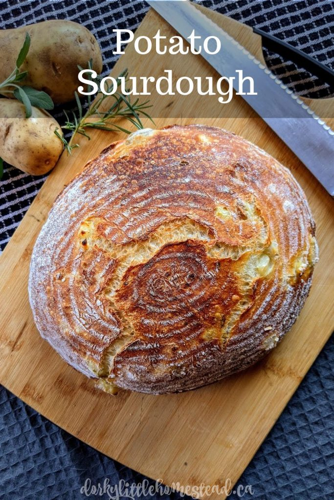Potato Sourdough. A rustic loaf of potato bread, with hints of rosemary. Lightly sour, moist and fluffy from the potatoes, and so good in every way.