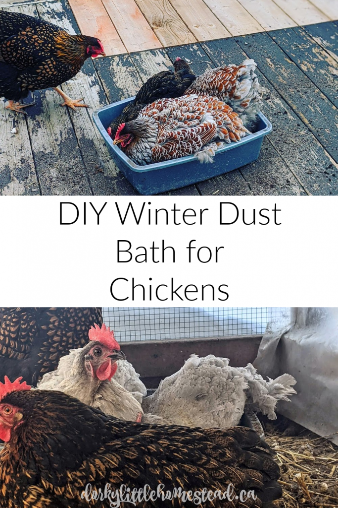 Chickens require a dust bath to maintain clean and healthy feathers. Providing one for the winter months is crucial, but easy to do yourself!